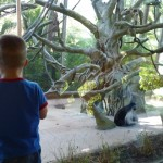 AJ was captivated by the monkeys