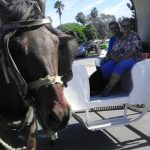 We rode in a horse drawn carriage in Ensenada.