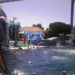 The dolphin show at Sea World was very flashy and splashy.