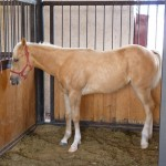 Chictify was an American Quarterhorse from Norco, CA. Practically neighbors really.