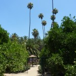 A view of the memorial garden and Roosevelt Palm Tree.