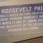 The Roosevelt Palm Plaque when it was first set up on 1965. (Note: The 5/8/03 date on the plaque is wrong)