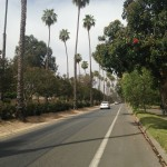 A view of some of the trees of Victoria Avenue.
