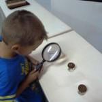 AJ examining the bugs.