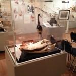 A crocodile skeleton from the John Muir exhibit.