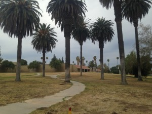Palm trees still dot the landscape of the school.